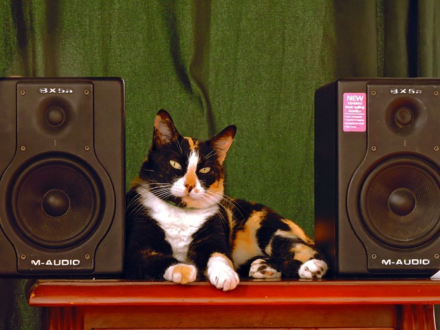 How to protect speakers from cats