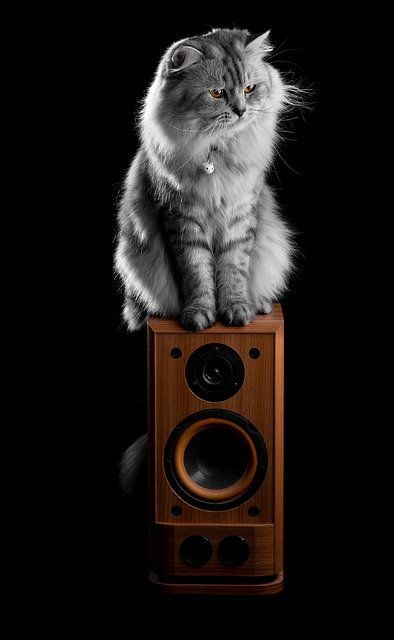Protect the top of your speakers from your pet cat
